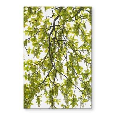 Glass Picture Kadam - Oak tree