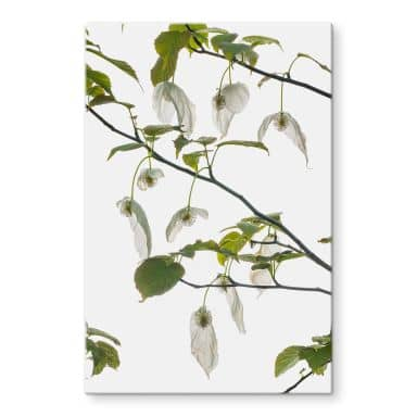 Glass Print Tan Kadam - Dove Tree