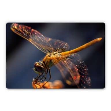 Glasbild Dufour - Libelle auf Tuchfühlung