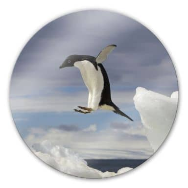 Tableau en verre - Pingouin en vol - Rond
