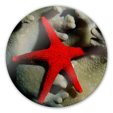 Red Starfish - Round Glass art