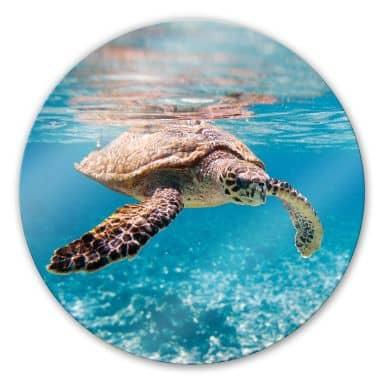 Tableau en verre - Tortue Marine- rond