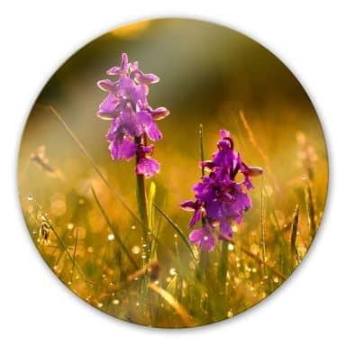 Glasbild Blumen im Morgentau - rund