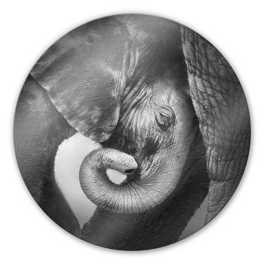 Glasbild Das Elefantenbaby - rund