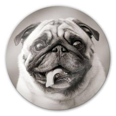 Loveable pug Glass art - round