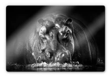 Glasbild Golob - Prustendes Nilpferd