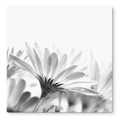Daisy in detail Glass art - square