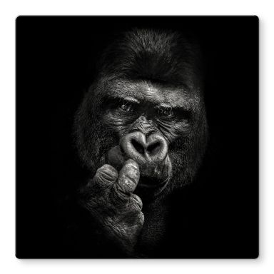 Glasbild Meermann - Der Gorilla - Quadratisch