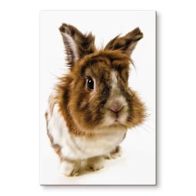 Glasbild Rabbit