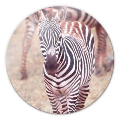 Zebra Foal Glass art - round