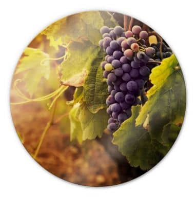 Glasbild Toskanische Weinrebe - rund
