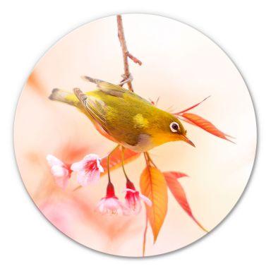 Glasbild Vogelgezwitscher in der Kirschblüte - rund