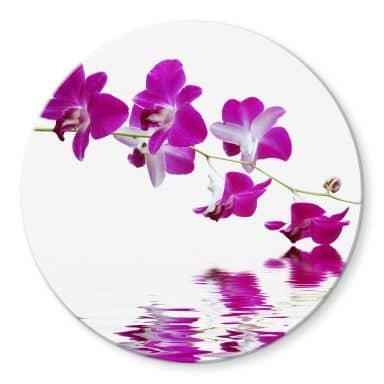 Glasbild Blütenzweig - rund