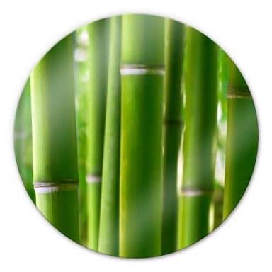 Glasbild Bambuswald - rund