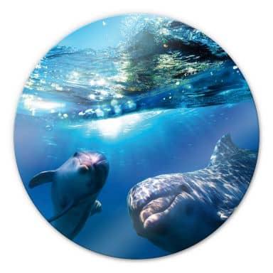Dolphins Underwater - Round Glass art