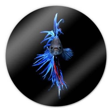 Tableau en verre - Poisson Fluo -rond