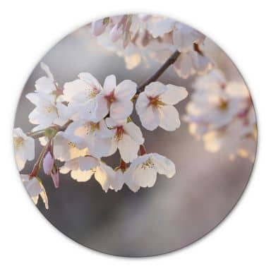 Sakura branch Glass art - round