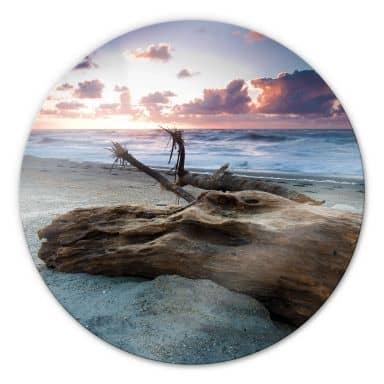 Tableau en verre - Vieux tronc d'arbre - Rond
