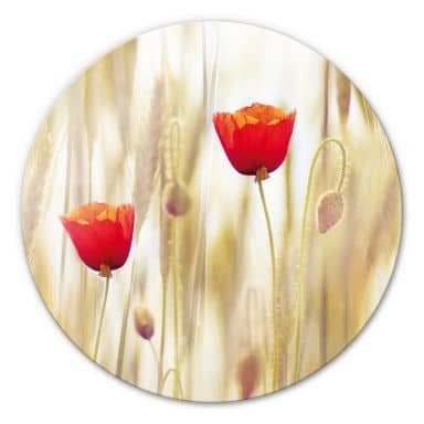 Glasbild Poppies - rund