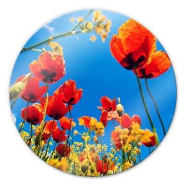 Glasbild Mohnblumen im Rapsfeld - rund