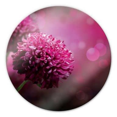 Glasbild Pink Dahlia - rund