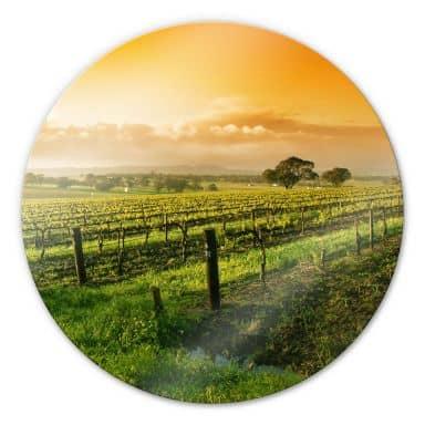 Glasbild Wein im Sonnenuntergang - rund