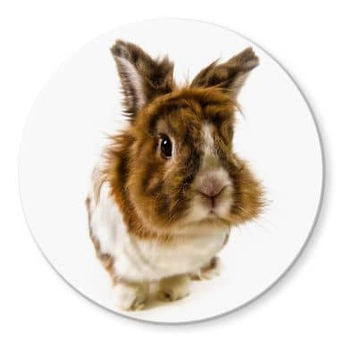 Glasbild Rabbit - rund