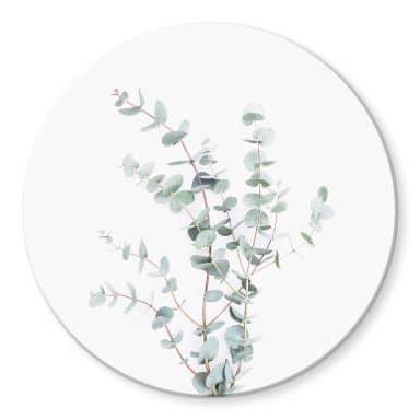 Glasbild Sisi & Seb - Eukalyptuszweig - Rund