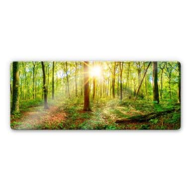 Glasbild - Tief im Wald - Panorama