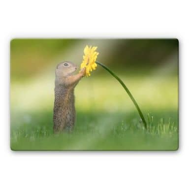 Glass print Dick van Duijn - Squirrel holding flower