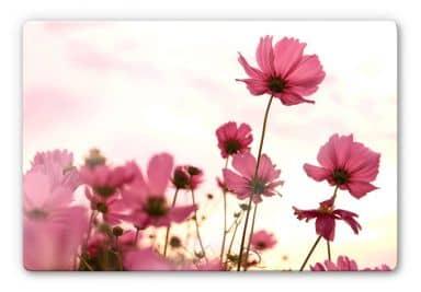 Pink Kosmeen Glass art