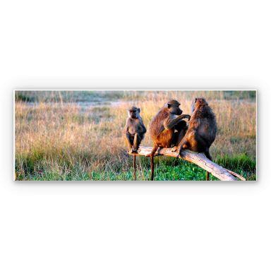 Wandbild Affenbande - Panorama