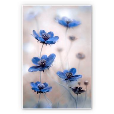 Wandbild Disher - Blue Cosmos