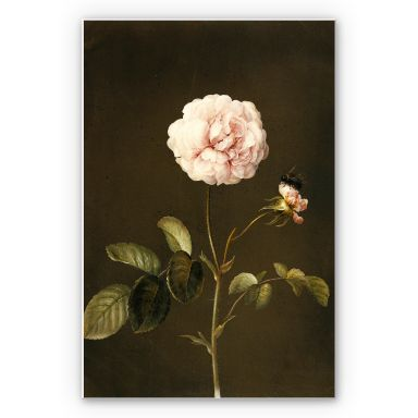 Forex print Dietzsch - French Rose with Hummel
