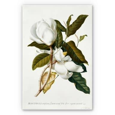 Forex print Ehret - Magnolia