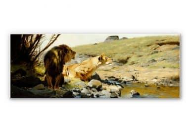 Wandbild Kuhnert - Ein Löwe und eine Löwin an einem Bach