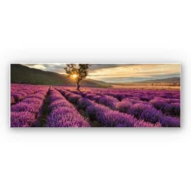 Wandbild Lavendelblüte in der Provence - Panorama1
