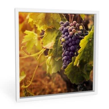Wandbild Toskanische Weinrebe