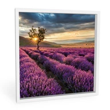 Wandbild Lavendelblüte in der Provence - quadratisch