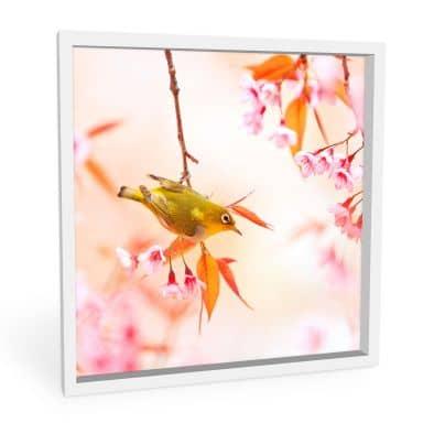 Wandbild Vogelgezwitscher in der Kirschblüte - quadratisch