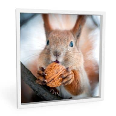 Forex print squirrel with nut - square