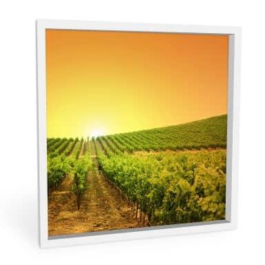 Wandbild Sonnenuntergang im Weinberg