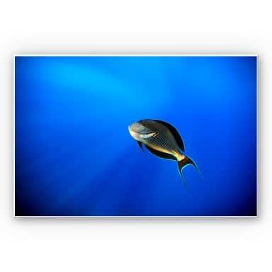 Wandbild Catta - Deep Ocean