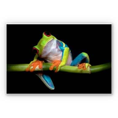 Wandbild Valverde - Green Frog