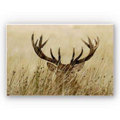 Forex Print Watchful deer