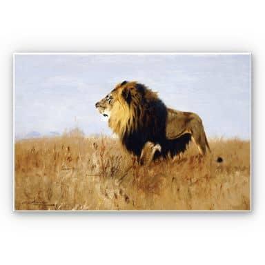 Wandbild Kuhnert - Löwe auf der Suche nach Beute