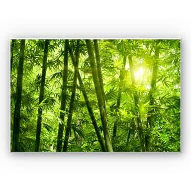 Forex print Sunshine in the bamboo forest