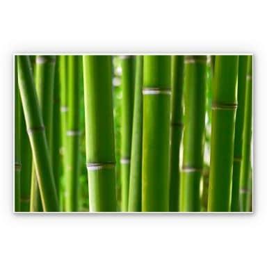 Wandbild Bambuswald