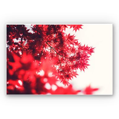 Wandbild Ahornbaum im Herbst