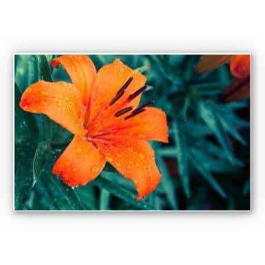 Wandbild Tropical Lily